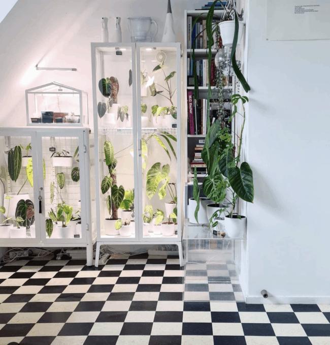 White glass cabinet full of plants.