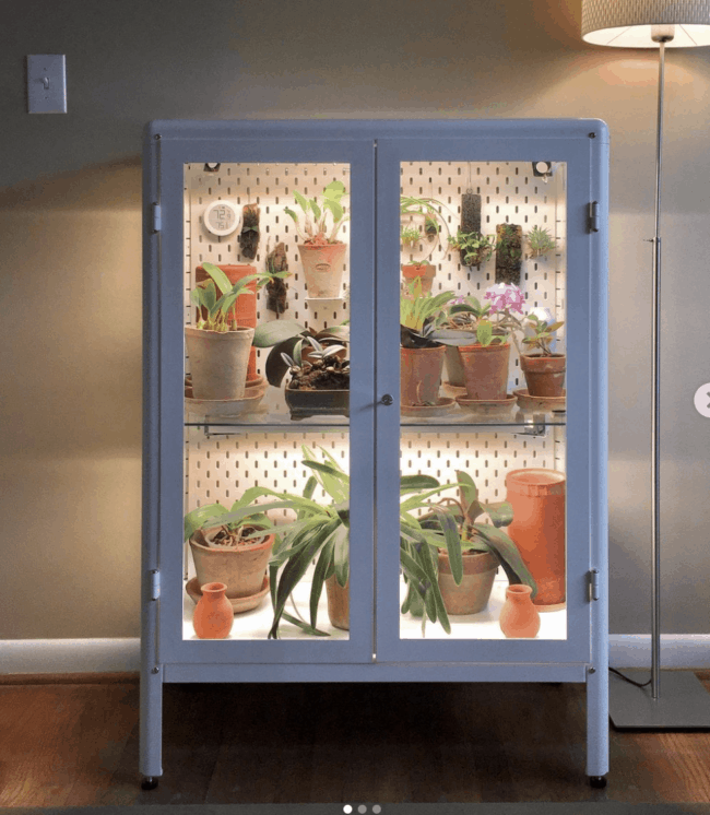 Grey glass cabinet full of air plants.