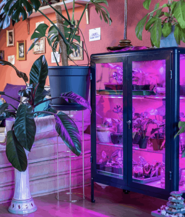 Black glass cabinet with purple LED lights.