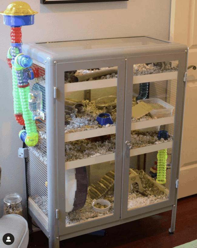 Grey glass cabinet full of hamster equipment.