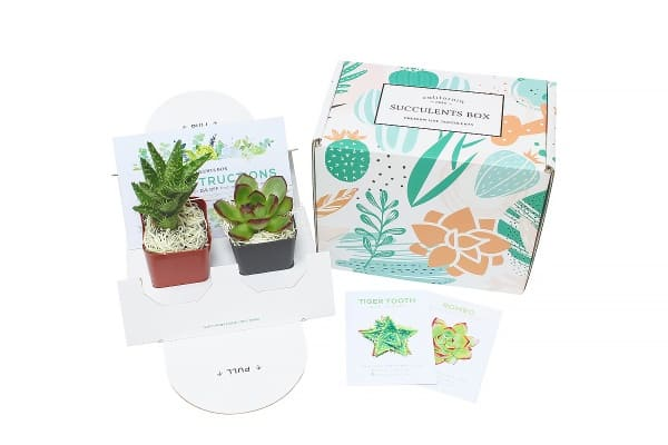 Succulents subscription box